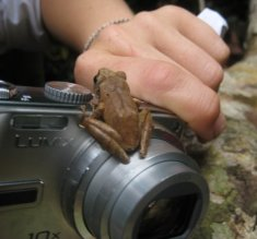 Frog on camera