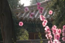 img_0429_china