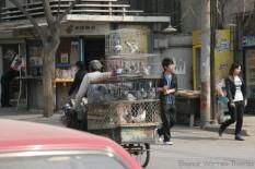 img_0662_china