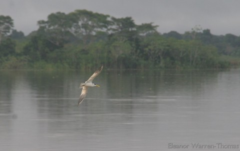 img_6796a_iquitos