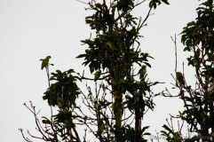 img_7061-1_iquitos